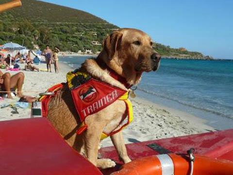 La scuola dei cani bagnino le professioni del mare sea - Come fare il bagno al cane ...