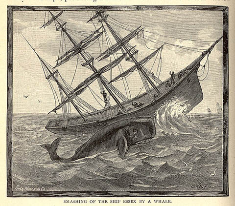 mobydick book report The tale of moby dick by herman melville, is seen through the eyes of ismael, a young man aspiring to be a sailor he meets captain ahab of the pequod, a whaling boat.