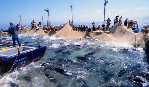 La Tonnara Una Vera Mattanza Report Nautica Report