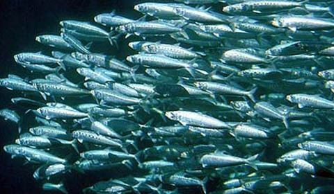 sito di incontri con pesce azzurro